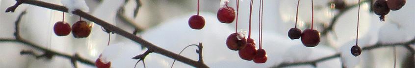 Berries-slider