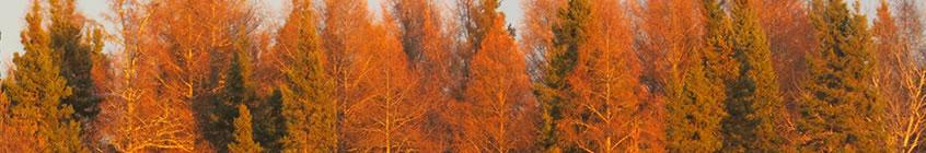 fall_slider4